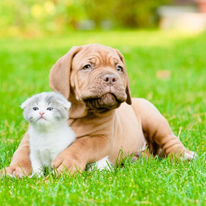 Veterinarian in Sarasota, FL - Your Pet's Portal
